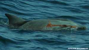 O lixo no mar e os riscos ecossistêmicos.